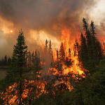 Art of Fighting Wildfires - 2 Hour Training DVD