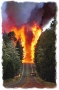 Wildfire Forest Fire Behaviour and Safety Trainnig DVD