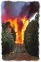 Wildfire Forest Fire Behaviour and Safety Trainnig DVD