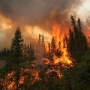Wildfire Forest Fire Weather Knowledge Training DVD