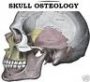 Dental Anatomy - Human Skull Osteology Training DVD